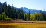 Page Meadows in the Fall- blazing aspens and mountain peaks
