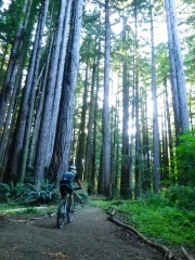 H riding Big Tree trail