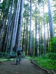 H riding Big Tree trail
