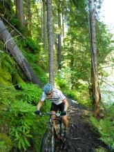 Slippery rooty goodness on the North Umpqua Trail