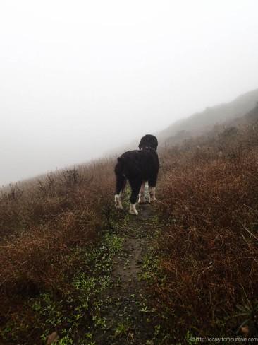 Daisy Fog Dog